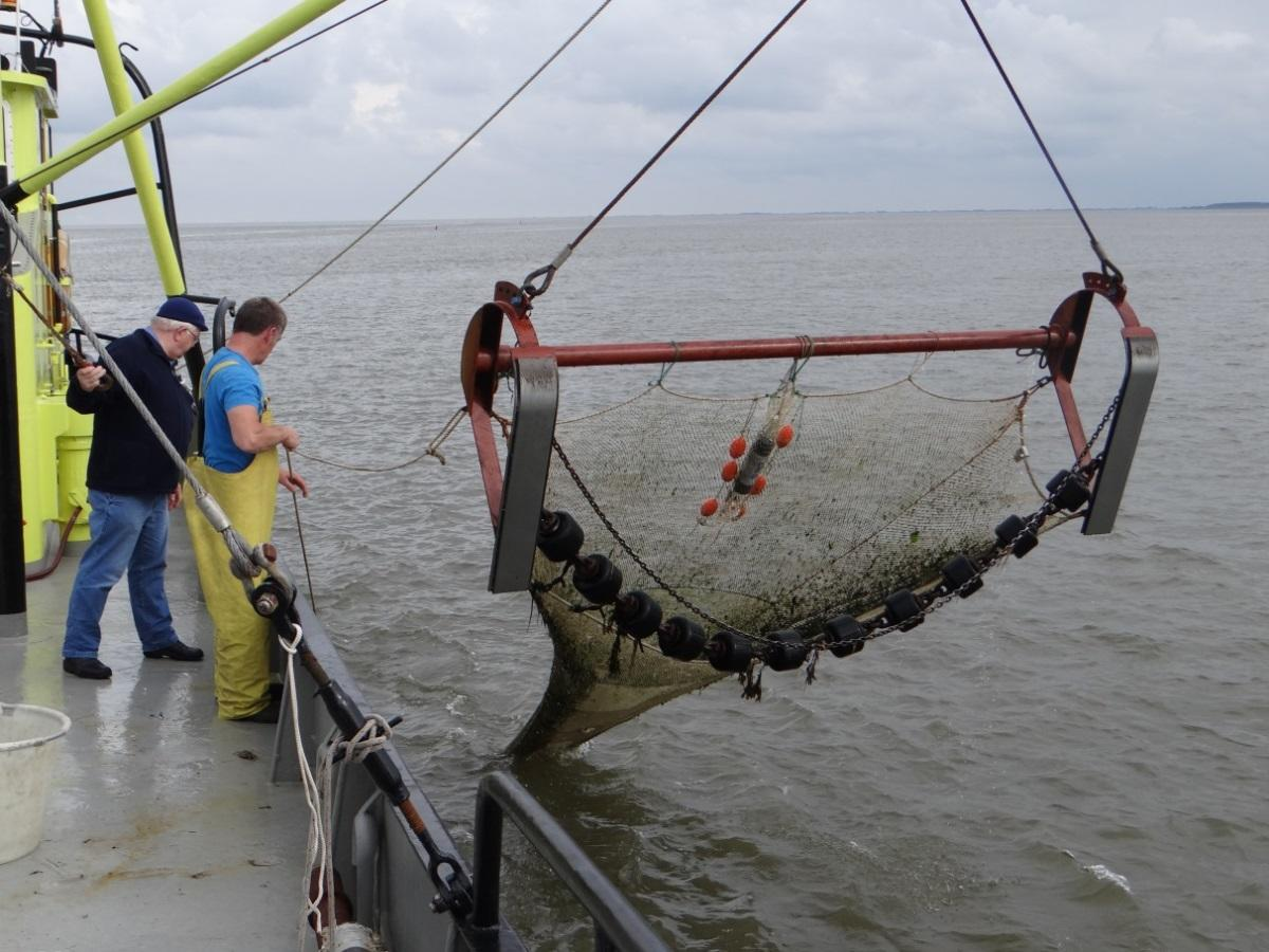 The 3 m beam trawl deployed in the Dutch Demersal Fish Survey