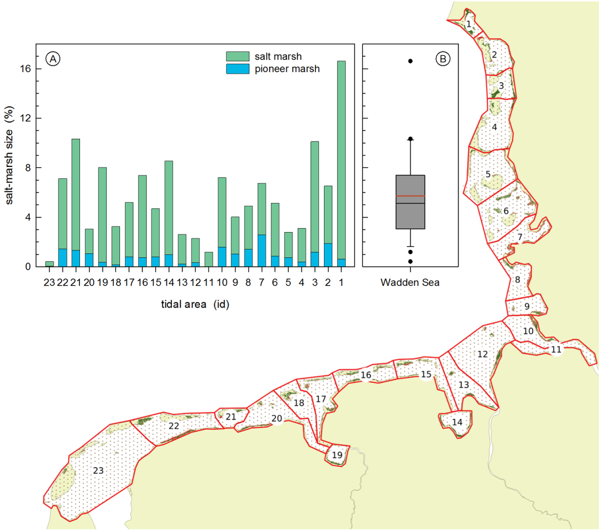 Distribution of salt marshes in the Wadden Sea