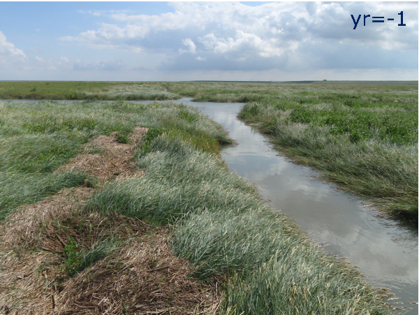 The effect of the partial filling of a collector drain in the salt marsh of Negenboerenpolder